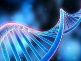 中国SLE患者:药物代谢酶基因标记的预测功能